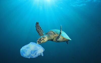 Oceani di plastica: c'è ancora speranza